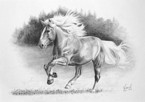 finsk häst teckning suomenhevonen piirustus