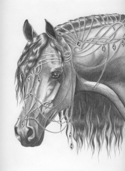arabian thoroughbred drawing