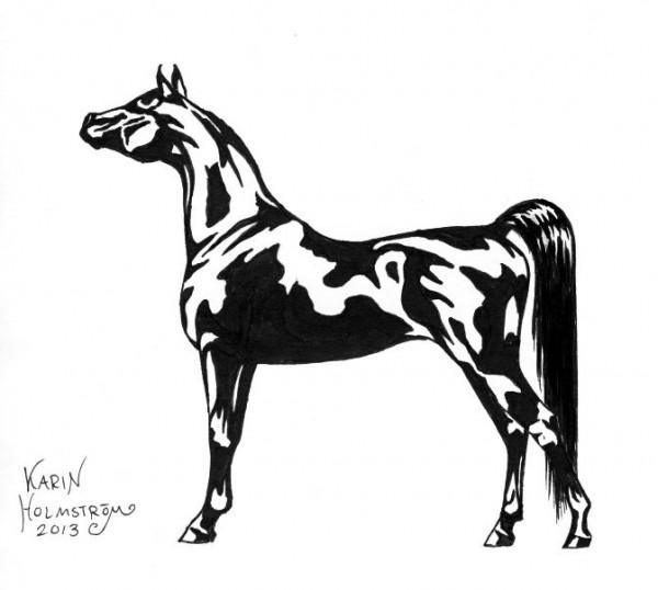 arabiskt fullblod teckning tusch arabialainen täysveri piirustus tussi