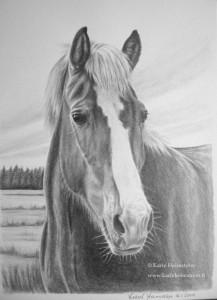 Häst-blogg