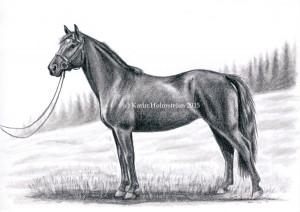 Hästbild-b